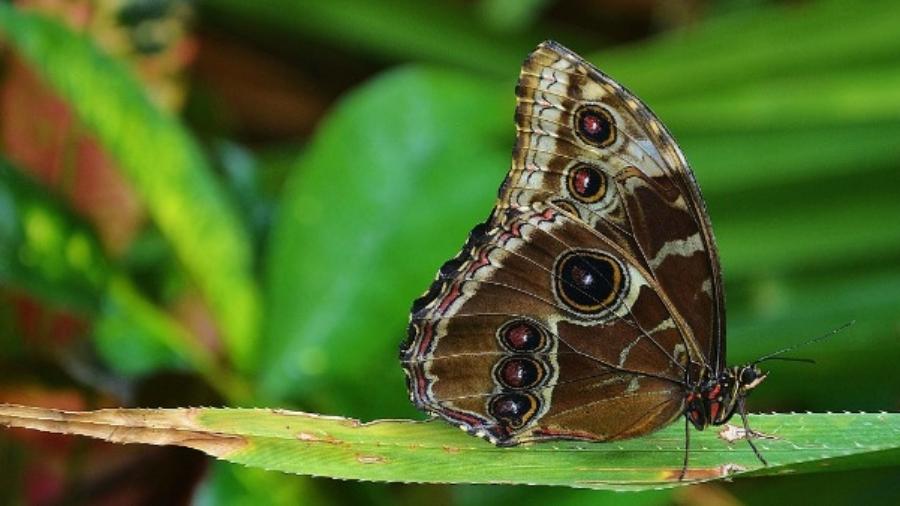 motyle w zoo warszawskim