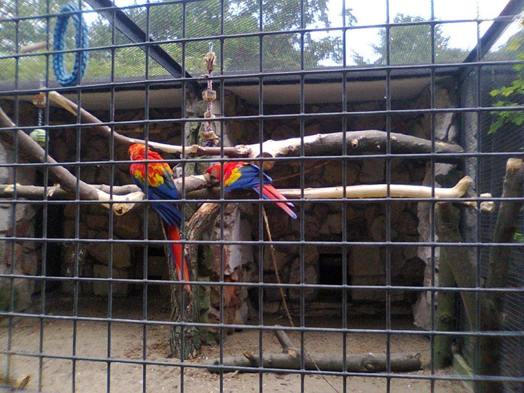 Dzikie Dni ara żółtoskrzydła