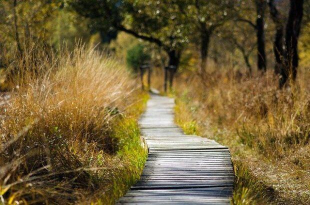 Idź do lasu by Kornelia Orwat